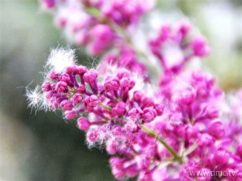 wallpaper-post: วอลเปเปอร์ดอกไม้ สีชมพูสวยๆ