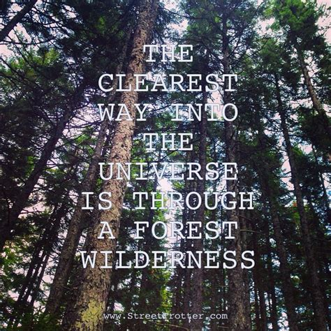 lost in the woods quotes