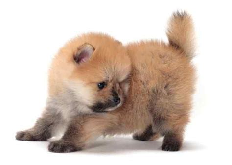 mixed breed dogs that don t shed miniature breeds that don t shed puppies