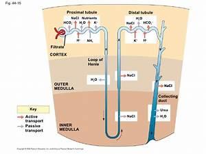 Ap Biology Chapter 44