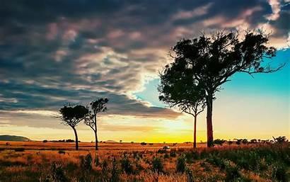 African Savanna Wallpapers Trees Cool Wallpapersafari Things