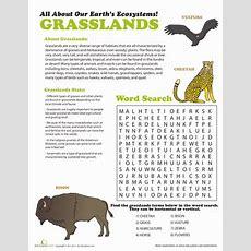 Grasslands Ecosystem  Worksheet Educationcom