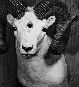 goat head | Tumblr