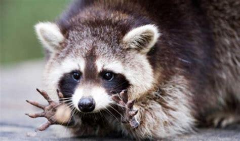 Dzīvnieki, kas spēj pārņemt pasauli pēc cilvēces nāves, 20 fotogrāfijas - Spoki - bildes 2