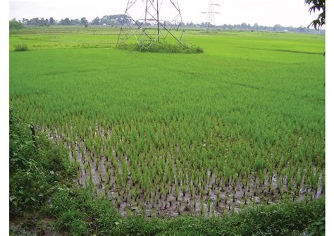 Food Crops in India   AglaSem Schools