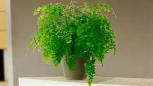 Le Uv Plante Interieur by Doucher Une Plante D Int 233 Rieur