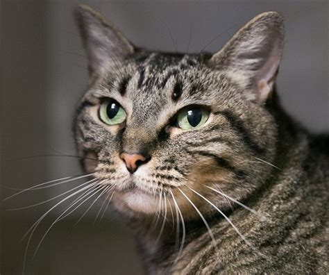 Jo In Pet Liangdian L rescue me bay area pets for adoption week of dec 4