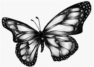 Butterfly Wallpaper Black And White - ClipArt Best
