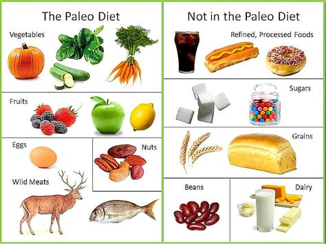 cuisine paleo the paleo diet positivemed