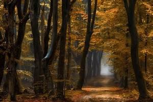 Wallpaper, Sunlight, Trees, Landscape, Fall, Leaves, Nature, Branch, Yellow, Morning, Mist
