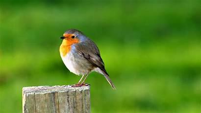 Birds Backgrounds Animals 1080 1920 Bird Wallpapers