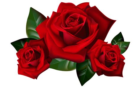 red roses png clipart picture hd desktop wallpaper