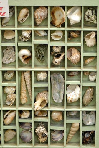 how to display shells ideas best 10 shell display ideas on pinterest seashell display display sea shells and treasure