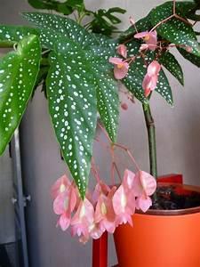Plante Fleurie Intérieur : etagere plante interieur fashion designs ~ Premium-room.com Idées de Décoration