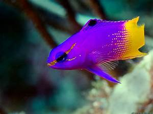 Wallpapers For > Most Beautiful Fish Wallpapers | I love ...