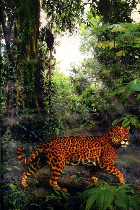 amazon rainforest seerowpedia fandom powered  wikia