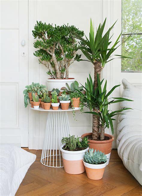 quelle plante pour une chambre des plantes dans la chambre une bonne idée enfant