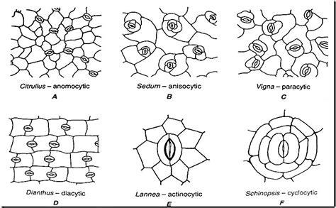 Modifikasi Jaringan Pada Anggrek by Biologi Gonzaga Try Out Jaringan Tumbuhan Xi