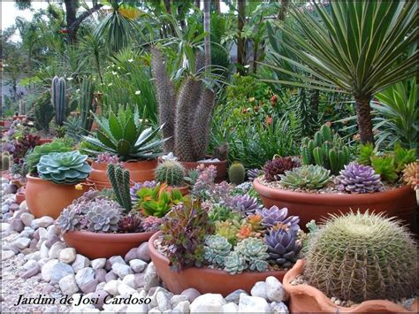 cactus and succulent container gardens 1230 best images about endless succulent ideas on pinterest