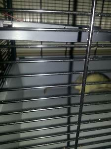 Pair of male Dumbo rats with cage | Leyland, Lancashire ...