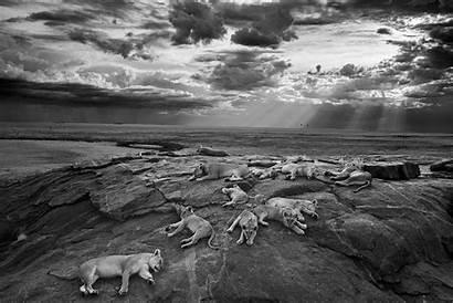 Wildlife Photographer Winning Finalists Nichols Michael Animal