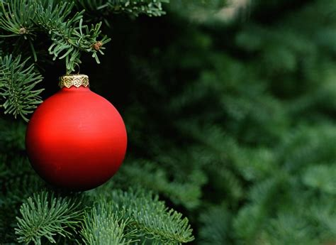 how to makeacheistmas tree stau up how to get rid of tree insects