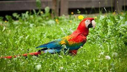 Parrot Colorful Wallpapers Birds 4k Backgrounds Desktop