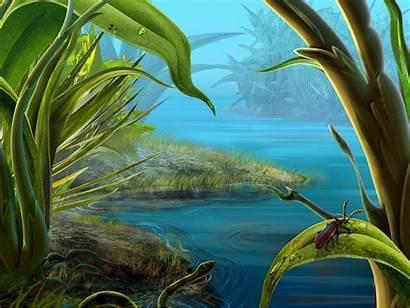 Exotic Desktop Wallpapers Beetle Nature Landscape Wallpapersafari