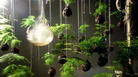 japanese string gardens suspend plants  ground