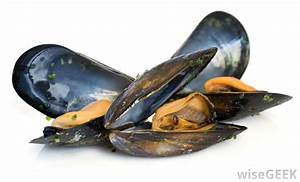 What are Mollusks? (with pictures)