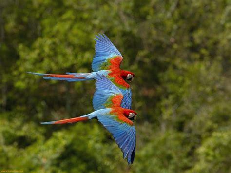 Colorful Birds Flying   WeNeedFun