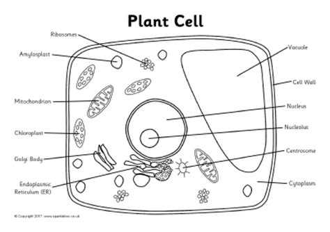 plant cell labeling worksheets