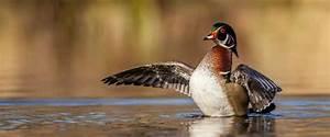 5 Tips For Early Season Ducks