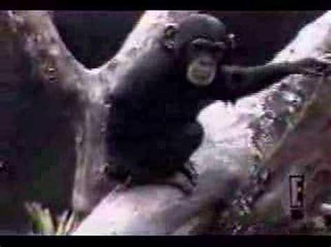 monkey smells finger youtube