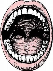 Open Mouth clip art Free vector in Open office drawing svg ...