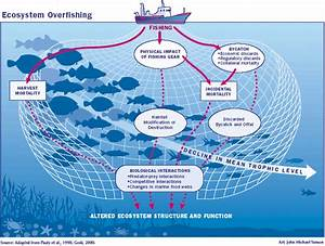 Solutions Of Overfishing