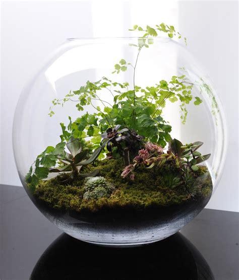 terrarium plants terrariums fish bowl gardening what s on jimmy b s mind