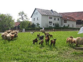 Wohnung Mieten In Bayreuth Privat by Ferienwohnungen Bayreuth Land G 252 Nstig Mieten Privat
