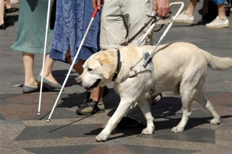 How Can People Who Are Blind Get Around On Their Own Better?