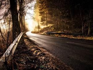 Autumnal, Beautiful, Color, Dawn, Daylight, Fog, Foggy, Morning, Forest, Landscape, Light, Mist