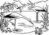 Pond Coloring Ecosystem Frogs Bociany Kolorowanki Storks Druku Hunting Colorir Lago Bocian Drawings Cegonhas Cegonha Rysunki Kolorowania Printable Its Template sketch template