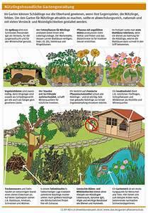Schädlinge Im Garten : n tzlinge wertvolle helfer im garten und gew chshaus ~ Lizthompson.info Haus und Dekorationen