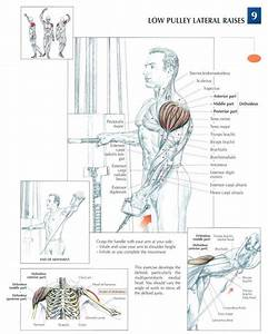 Low Pulley Lateral Raises | Shoulder Exercises | Pinterest ...