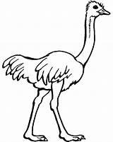 Coloring Ostrich Colorir Zoo Preschool Kolorowanki Bird Animal Imprimir Avestruzes Desenhos African Printable Colouring Animals Animais Colorare Cartoon Kindergarten Ostriches sketch template