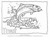 Trout Coloring Rainbow Fish Drawing Pages Outline Printable Jumping Animal Forelle Realistic Adult Template Water Ausmalbilder Malvorlagen Detailed Malvorlage Fishing sketch template