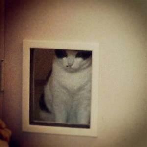 301 moved permanently for Cat bathroom door