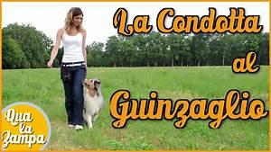 Cane che tira al guinzaglio: la CONDOTTA Addestramento Educazione cani n° 7 Qua la Zampa