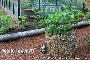 How to Grow Potatoes in a Tower - Update - One Hundred ...