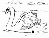 Swan Coloring Pages Drawing Colouring Printable Drawings Swans Dot Sheet Animals Samanthasbell Reference sketch template