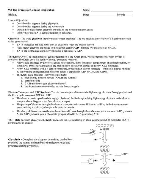 chapter 9 review worksheet cellular respiration